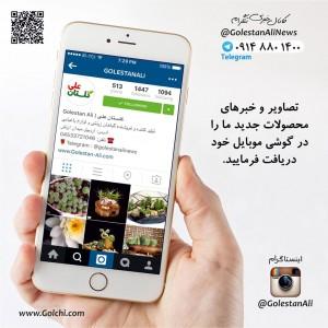 تصاویر و خبرهای گلستان علی در اینستاگرام