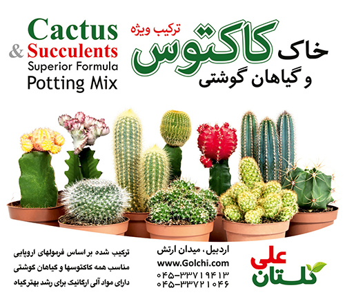 Cactus-lable-potting