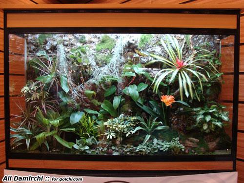 گزارش تصویری از نمایشگاه گل و گیاه تهران – اردیبهشت 1389 | گلستان علیگل آرایی در تراریوم