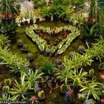 قلب وسط با نوعی گیاه هویا Hoya Kerrii