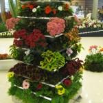 ستون گل با کالانکوآ و حسن یوسف و ژربرا و ...