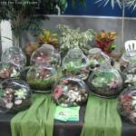 تراریومهایی با فیتونیا و گلهای دیگر
