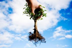 [عکس: planting.jpg]