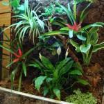 تراریوم برای گیاهان خانگی