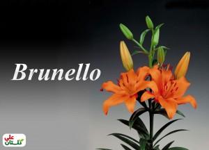 لیلیوم نارنجی رقم Brunello