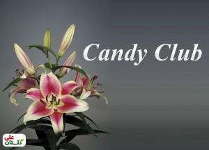لیلیوم دورنگ رقم Candy Club