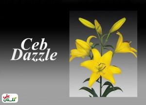 لیلوم زرد رقم Ceb Dazzle