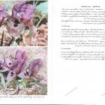 pg74-75