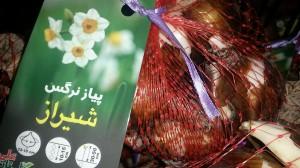 shiraz1