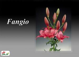 Fangio-Golestan-Ali