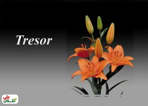 Tresor-Golestan-Ali