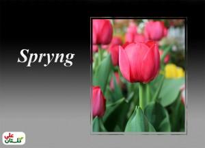 لاله سرخ رقم Spryng (تصویر از تولیدات گلستان علی برای نوروز 92)