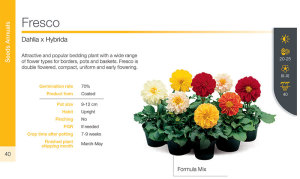 SyngentaFlowers_Seeds_2013-2014-40