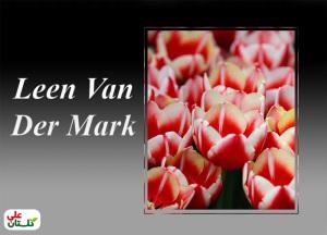 لاله سرخ با لبههای سفید ترکیب رنگ منحصر بفرد و مورد پسند گلدوستان