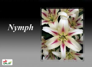 Nymph-2