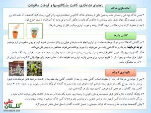روش کاشت عمومی بذر کاکتوسها