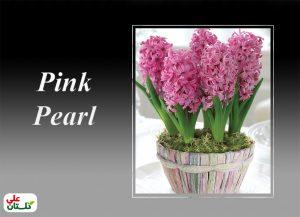 سنبل صورتی رقم پینک پیرل گلهای این رقم نسبت به سایر رنگها زودتر شکوفا شده و برای پیشرس کردن تجربه راحتتری هستند