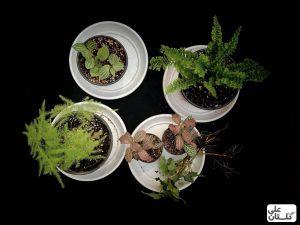 انتخاب گیاهان رطوبت دوست