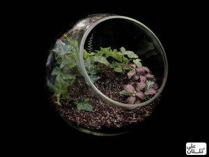 قرار گیری گیاهان در کوکوپیت
